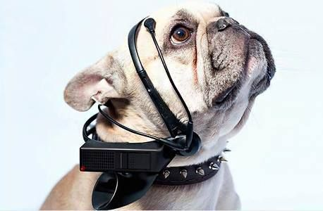 Talking Dog Device Ready to Hit Market Soon Doggielicious