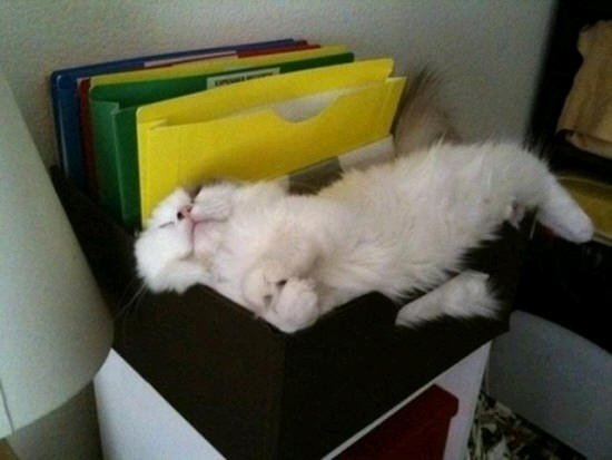 Funny animal pictures Cats can sleep anywhere part 2