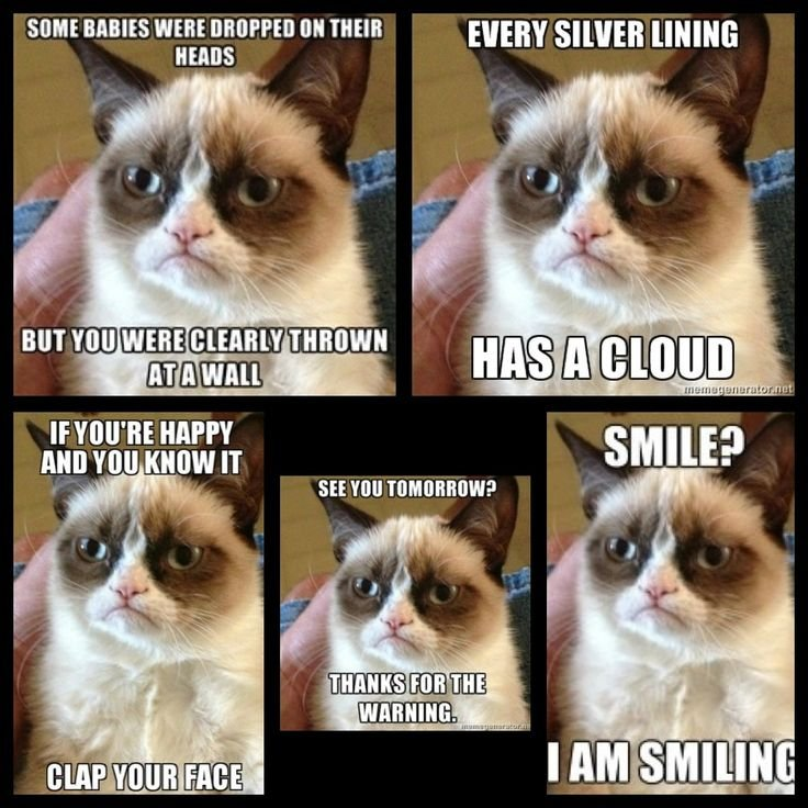 Grumpy Cat With Sayings and Becuo