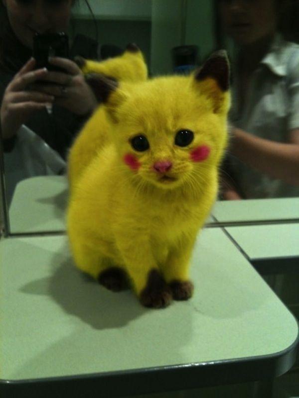 Pikachu Credit