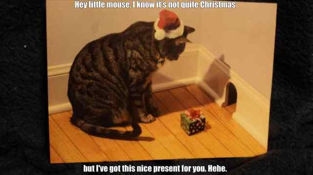 cute cat memes about christmas