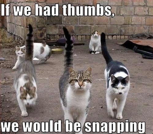 Cat Memes Cat Memes Cat Memes Cat Memes