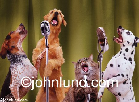 A Dalmation An Airdale A German Short Haired Pointer and A Cat Sing Into Microphones in This funny Cat And Dog Picture