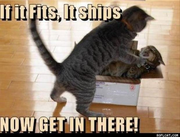 File Funny Cats Dogs 19 mee