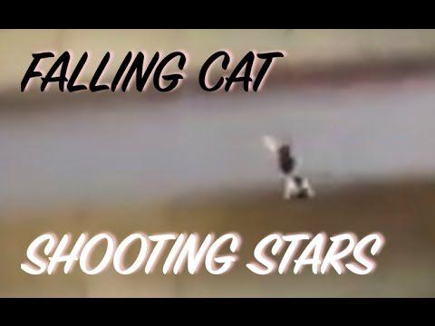 Shooting Stars Falling Cat