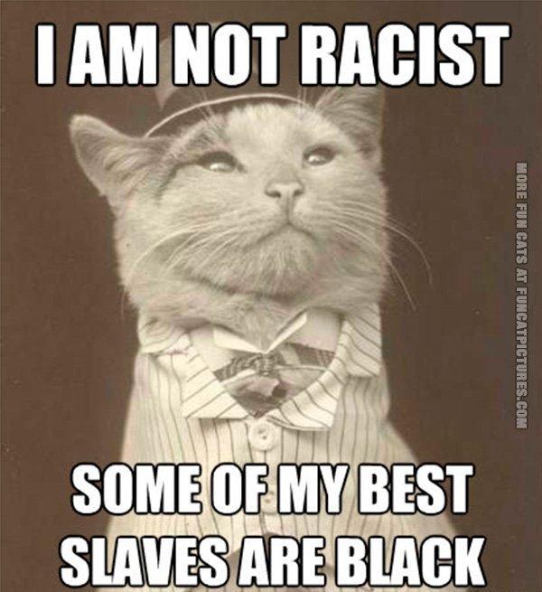 aristocat funny cat 10
