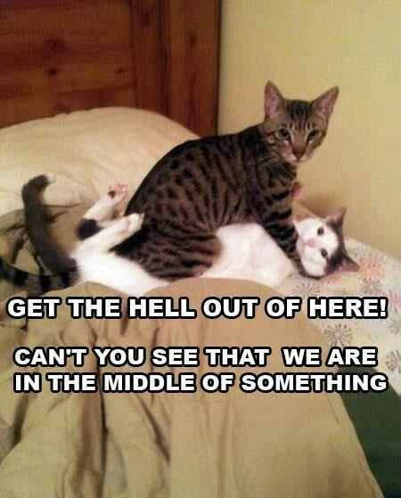 Inappropriate but funny Cool Cats What s So Funny Funny Cats Funny Animals