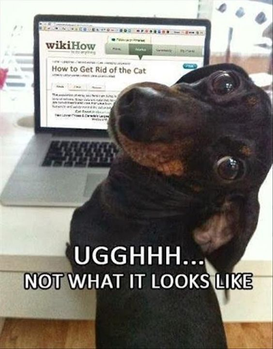 Funny dog picture with caption funnydogwithcaptions dogsfunnywithcaptions