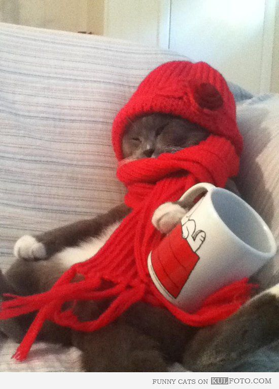 Hipster cat Funny cat wearing winter hat and scarf sleeping holding a Snoopy mug kinda looking like a homeless guy