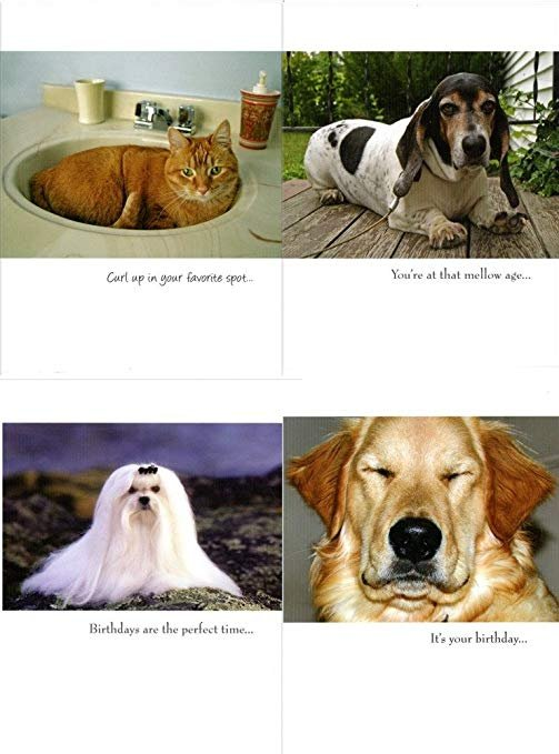 EXTREMELY FUNNY DOG AND CAT THEMED BEST VALUE 48 BIRTHDAY CARDS jg bassett
