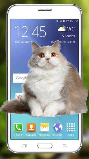 Funny Cat Walks Screen Cute Animation & Joke