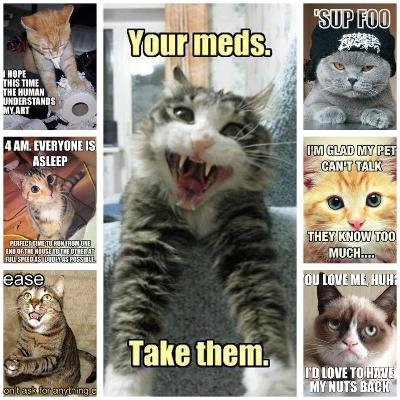 Cat memes to make your day better if you re having a bad day