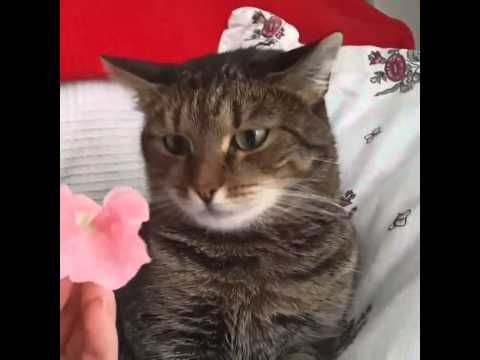 Flower crashes cat By Sophiella cats n nails via 4GIFs