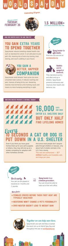 World Spay Day celebrates twenty years of promoting spay neuter and reducing pet homelessness and