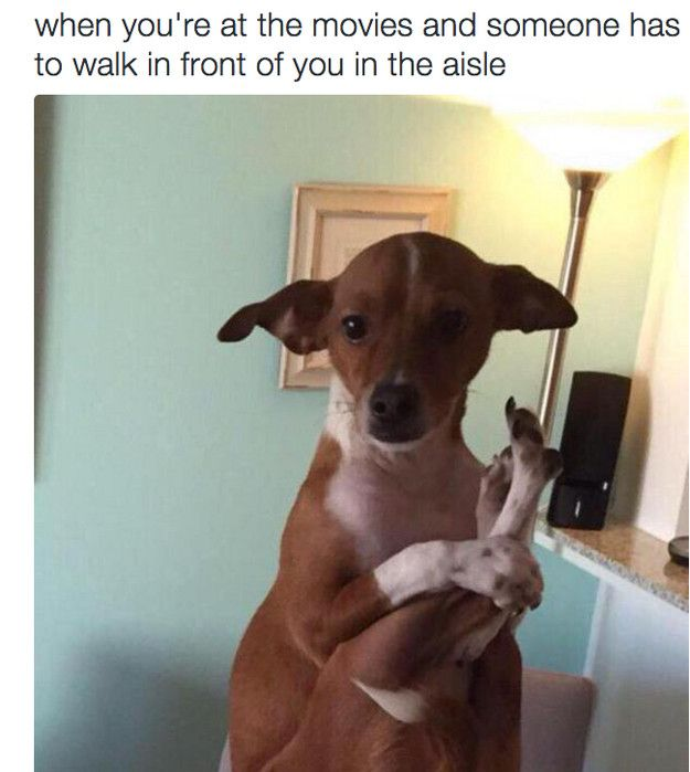 Funny Quotes About Dogs 17 Animal Memes that are Just Way too Relatable Funny Quotes
