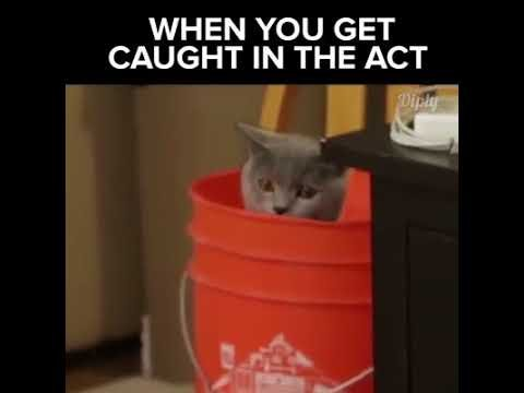 FUNNY CAT GOT CATCH ON ACT MUST SEE 2017
