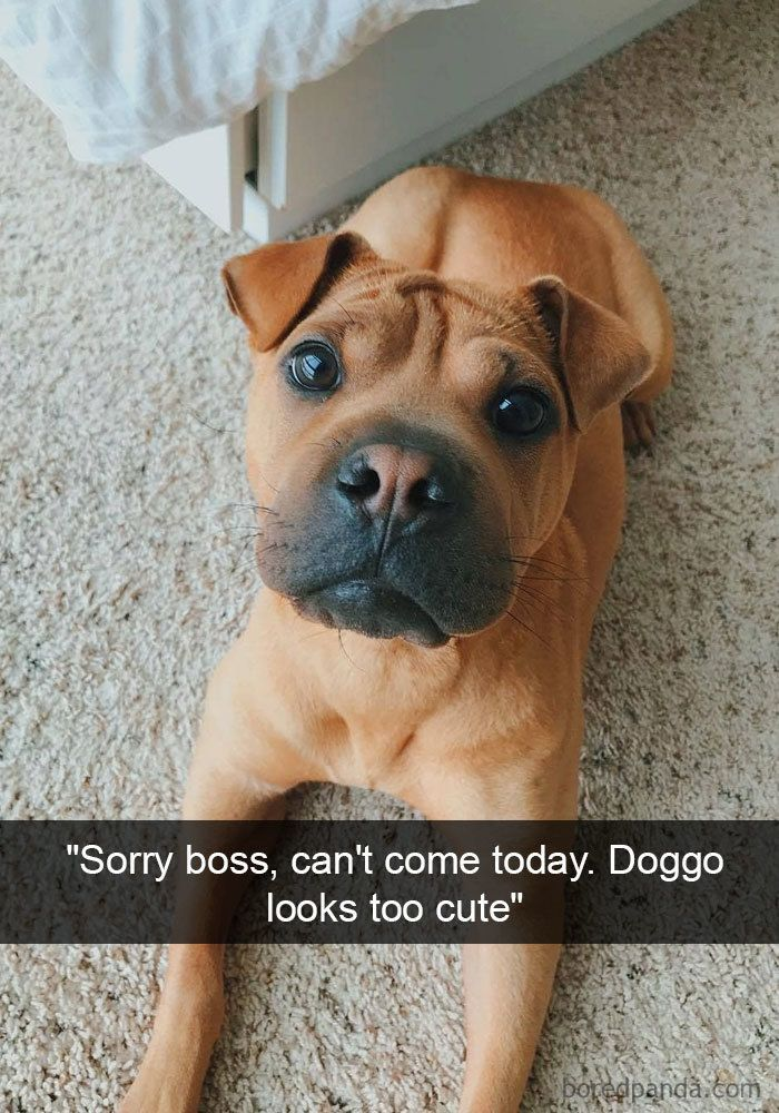 20 Hilarious Dog Snapchats That Are Impawsible Not To Laugh At Part 5 Love Pinterest