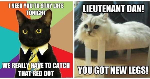 funny cat memes gallery