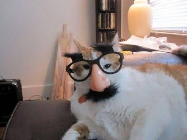 Funny Costumes For Cats 33 Desktop Wallpaper