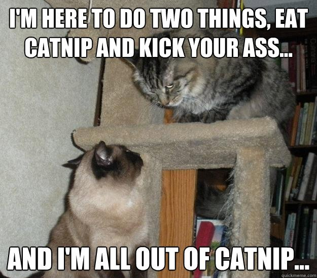 I m here to do two things eat catnip and kick your ass And I m all out of catnip