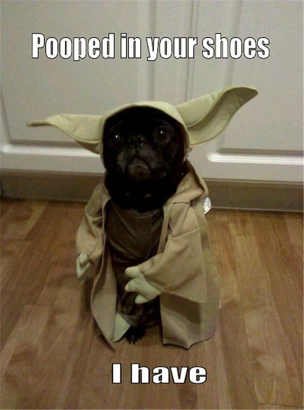 yoda dog pooped in your shoes i have