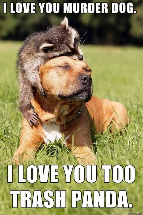 I love you murder dog I love you too trash panda XD Animal life