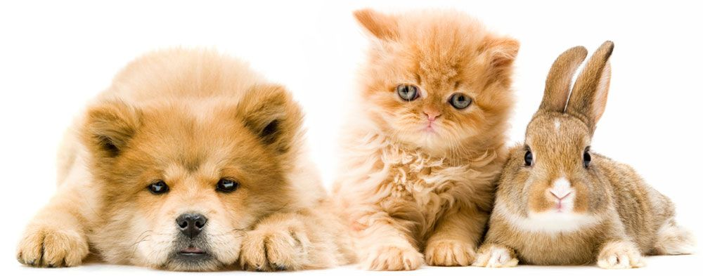 Collect the Shocking Funny Cat and Dog Pictures together