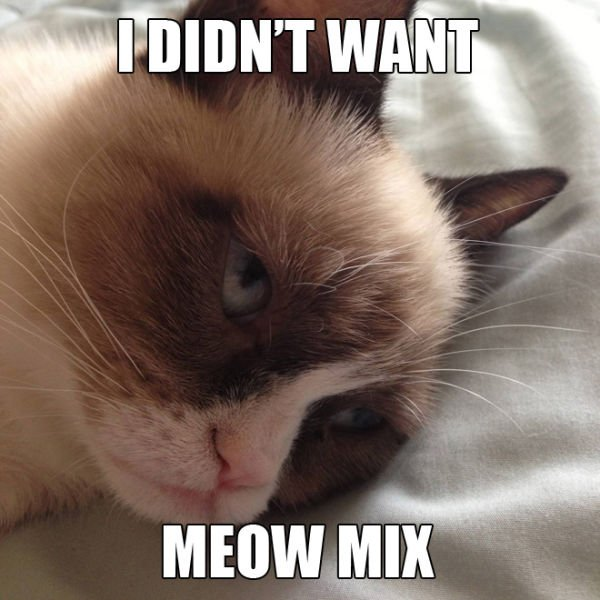 "3 Funny ""Grumpy Cat"" Meme Selection"