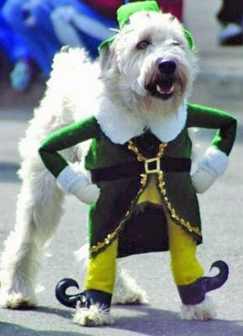 13 Hilarious Dog Costumes More