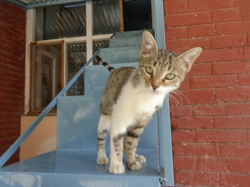 Afghan Cat Miss Kitty is Reunited with Her Sol r in Texas Funny Cat Memes Funny