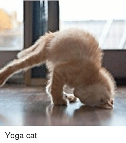 Funny Yoga and Cat