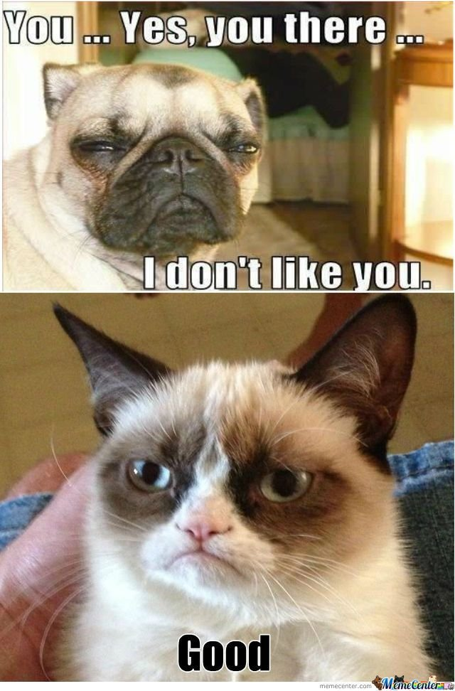 Grumpy Dog Vs Grumpy Cat Take 2 Cats = = Grumpy Cat Pinterest