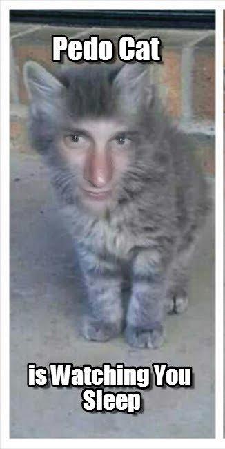 Pedo Cat Pedo Cat Is Watching You Sleep by crankin88 tags