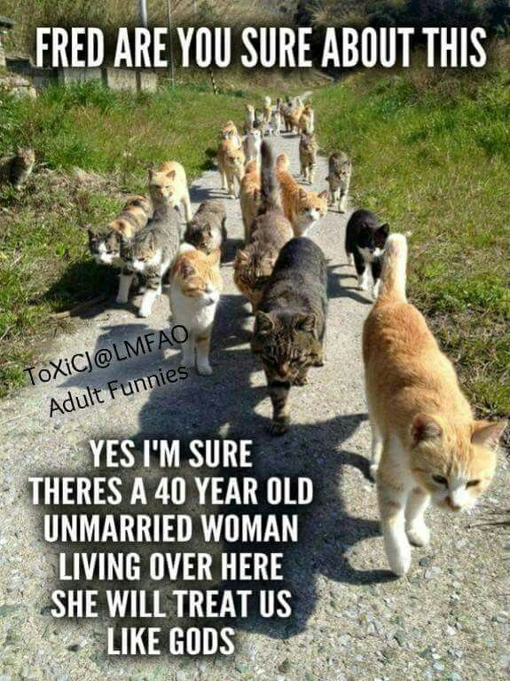 30 Hilarious Cat Memes Memes Tap the link to check out great cat products we have for your little feline friend