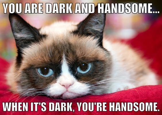 Pin by Mark Edward Cavanaugh on Grumpy Cat Pinterest