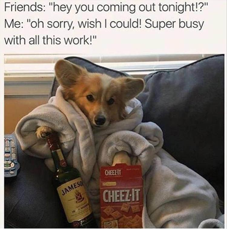 Collect the Suprising Funny Animal Sleepy Memes