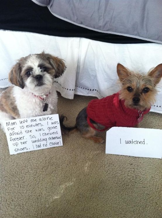 Funny Dog funnydogshaming