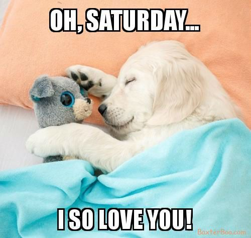 Puppy loves Saturday cuddles with dog toy Funny Dog Memes Funny Dogs Pet