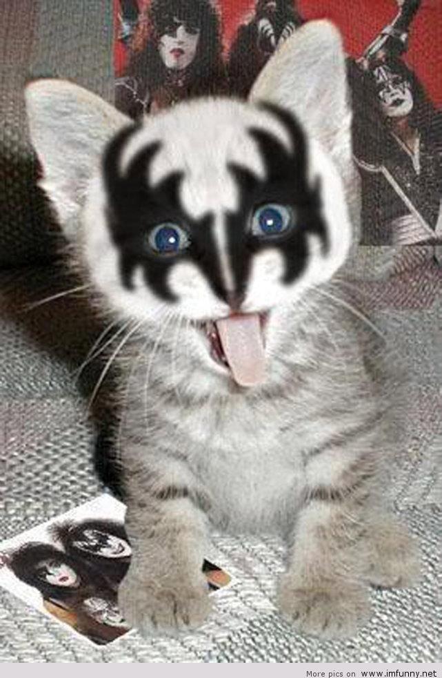 Halloween makeup for little cats