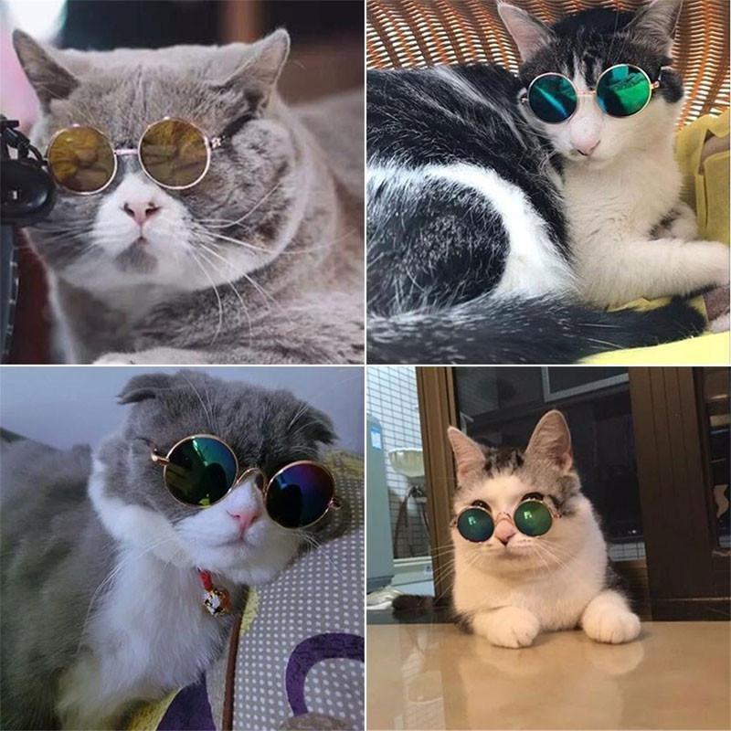 PAW FAM Cute Stylish and Funny Cat Sunglasses