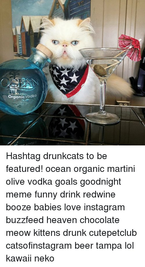 Beer Heaven and Memes Organic Vodka Hashtag drunkcats to be featured ocean