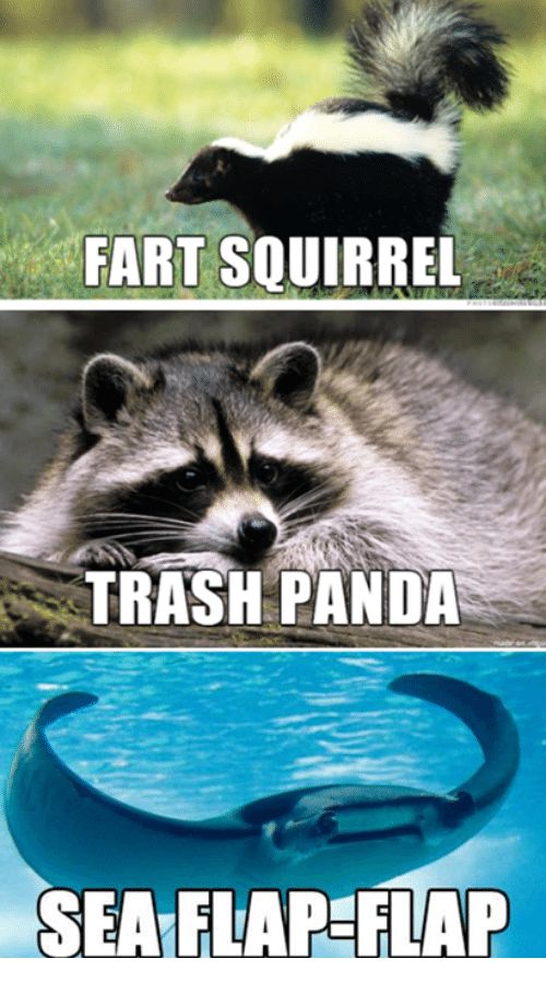 Farting Squirrel