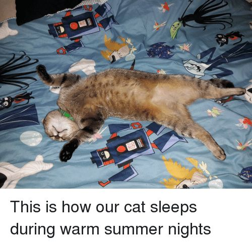 Funny Summer and How This is how our cat sleeps during warm summer