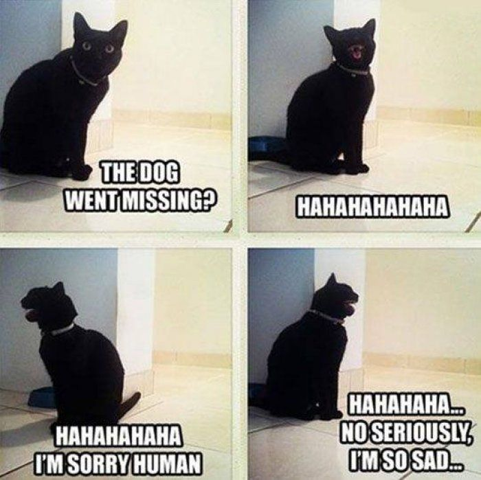 The dog went missing funny cat pictures