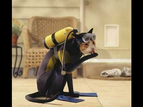 The best cute & funny cat dog pet animal Halloween costume ideas List of 2015