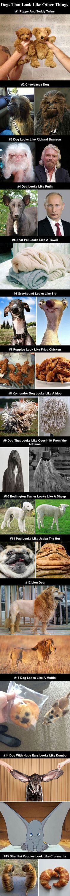 Dogs That Look Like Other Things cute animals dogs adorable dog puppy animal pets puppies humor funny pictures funny animals funny pets funny dogs