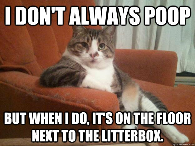 I don t always poop But when I do it s on the floor next to the litterbox