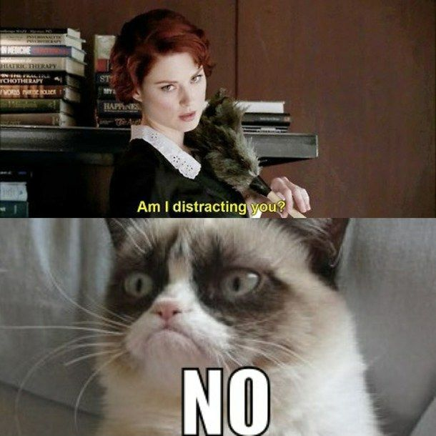 Adorable ahs american horror story cats clean funny grumpy 610x610 Clean funny memes hilarious story