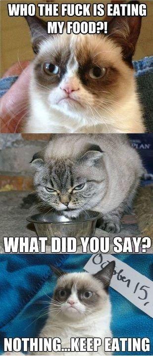 tartar sauce the cat