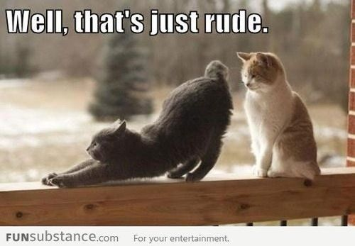 As the quote says – Description 30 Hilarious Cat Memes